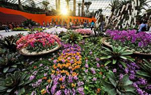 Фото Сингапур Сады Орхидеи Лучи света Gardens by the Bay