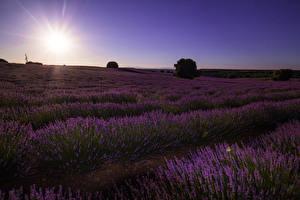 Обои Испания Пейзаж Рассветы и закаты Поля Лаванда Malacuera Природа