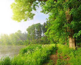 Фотографии Лето Озеро Деревья Тропинка Трава