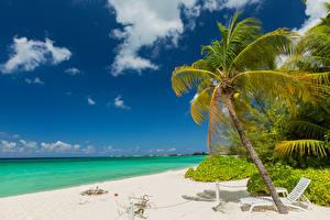 Фотографии Тропики Берег Небо Облака Пальмы Шезлонг Grand Cayman Природа
