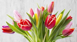 Фотография Тюльпаны Крупным планом