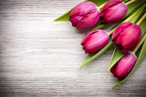 Картинка Тюльпаны Вблизи Бордовый