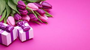 Фото Тюльпаны Фиолетовый Подарки