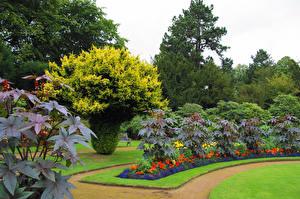 Фото Великобритания Сады Газон Кусты Wentworth Castle Gardens