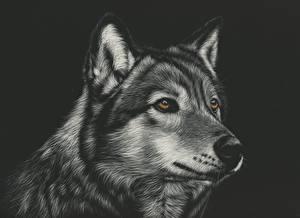 Картинки Волки Рисованные Голова Черно белые Черный фон Животные