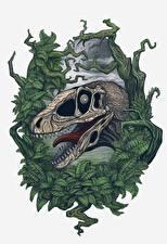 Фотографии Древние животные Динозавры Черепа Зубы Deinonychus