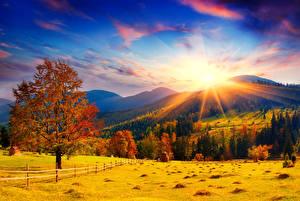 Фотография Осенние Поля Небо Пейзаж Деревья Холмы Солнца Природа