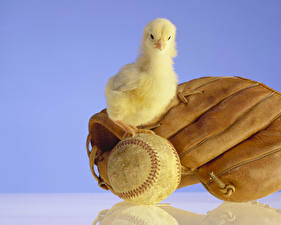 Картинка Птица Птенец курицы Цветной фон Отражение Перчатках Мячик животное