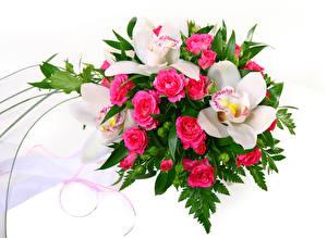 Фото Букеты Розы Орхидеи Белый фон