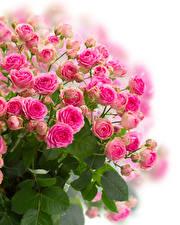 Фотография Букеты Розы Белый фон Розовый