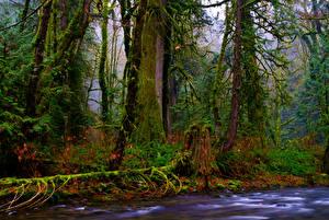 Картинка Канада Парки Леса Деревья Мох Ветвь Goldstream Provincial Park Vancouver Island