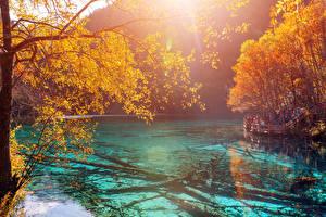 Обои Китай Цзючжайгоу парк Парки Озеро Осень Ветки Природа
