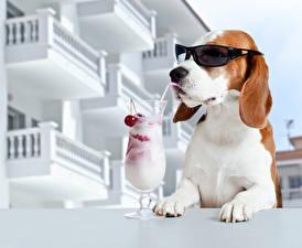 Картинка Собаки Коктейль Бокалы Очки Смешные Бигль Животные