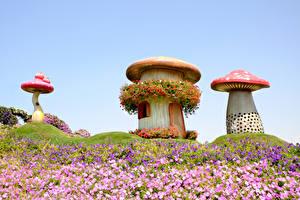 Фотография Дубай Парк Грибы природа Петуния Дизайна Miracle Garden