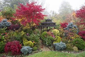 Фото Англия Сады Пагоды Кусты Walsall Garden Природа