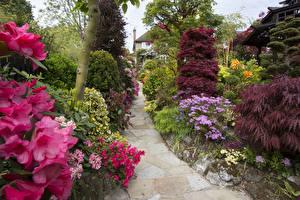 Картинки Англия Сады Рододендрон Кусты Walsall Garden Природа