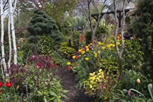Фотография Англия Сады Тюльпаны Walsall Garden Природа
