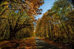 Фотография Леса Осенние Тропинка Деревья Листва