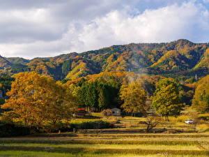 Фото Леса Осень Деревья Холмы