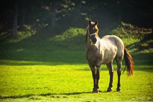 Обои Луга Лошади Животные