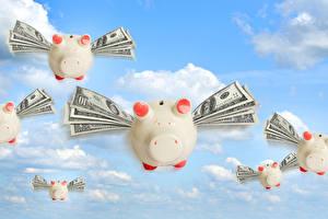 Картинка Деньги Домашняя свинья Доллары Купюры Небо Летящий
