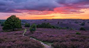 Картинки Нидерланды Поля Лаванда Рассветы и закаты Тропа Природа