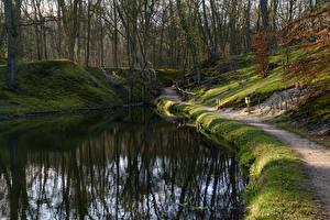 Фотографии Нидерланды Леса Пруд Тропа Elswout