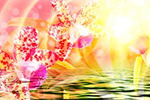 Фотография Орхидеи Вблизи Вода