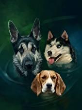 Обои Рисованные Собаки Вода Овчарка Хаски Бигль Трое 3 Голова