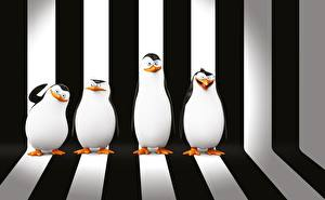 Фотография Пингвины Мадагаскар Полосатый Penguins of Madagascar 3D_Графика