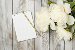 Картинки Пионы Блокнот Карандаши Доски Цветы