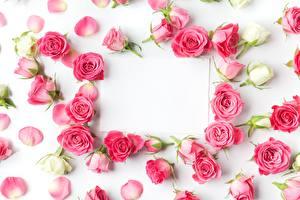 Картинки Розы Шаблон поздравительной открытки Цветы