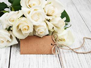 Картинки Розы Доски Белый Шаблон поздравительной открытки Цветы