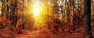 Фотография Времена года Осень Леса Деревья Тропинка