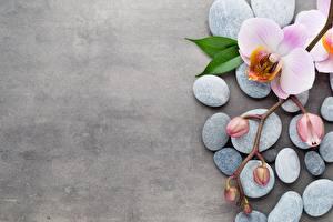 Картинка Камни Орхидеи