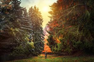 Фотографии Швейцария Парки Осенние HDRI Ель Природа