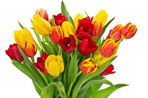 Картинка Тюльпаны Букеты Белый фон