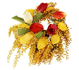 Фотография Тюльпаны Мимозы Белый фон
