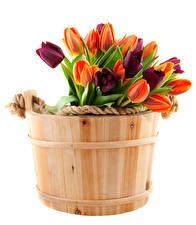 Фотографии Тюльпаны Белый фон Ведро