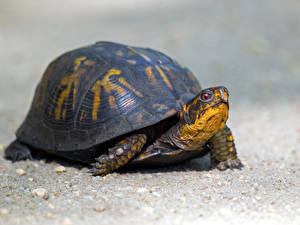 Картинка Черепахи Вблизи
