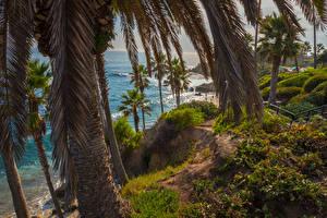 Фотографии Штаты Берег Калифорния Пальмы Скала Ствол дерева Laguna Beach Природа
