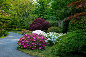 Фото Штаты Сиэтл Парки Рододендрон Кусты Seattle Japanese Garden Природа