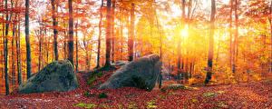 Фотографии Украина Осенние Леса Камень Закарпатье Лучи света Деревья Листва Природа