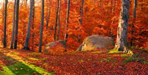 Картинки Украина Леса Осенние Камень Закарпатье Ствол дерева Листья Природа