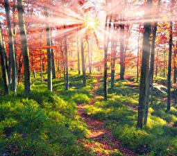 Картинки Украина Леса Осенние Закарпатье Деревья Лучи света Трава Тропинка