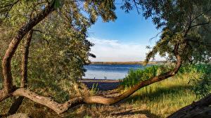 Фото Украина Реки Берег Ветки Nikolaev Природа