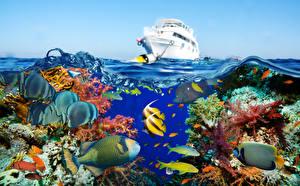 Фото Подводный мир Кораллы Рыбы Яхта Животные