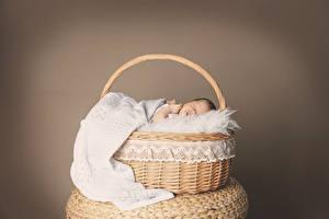 Обои Корзина Грудной ребёнок Спят Дети