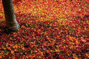 Обои Осень Листва Разноцветные Природа