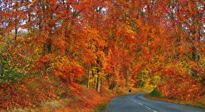 Обои Осенние Дороги Леса Листва Природа